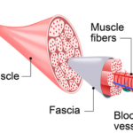 Fascia Stretching Therapy in Grand Rapids MI - Body by Choice Training
